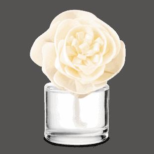 Fragrance Flower Buttercup Belle