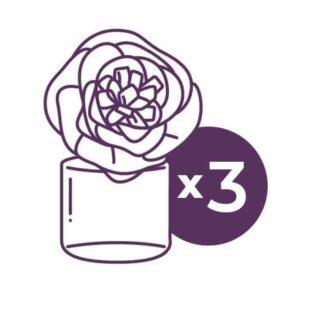 3 Fragrance Flowers